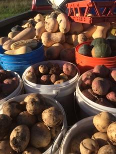 PotatoesSquash